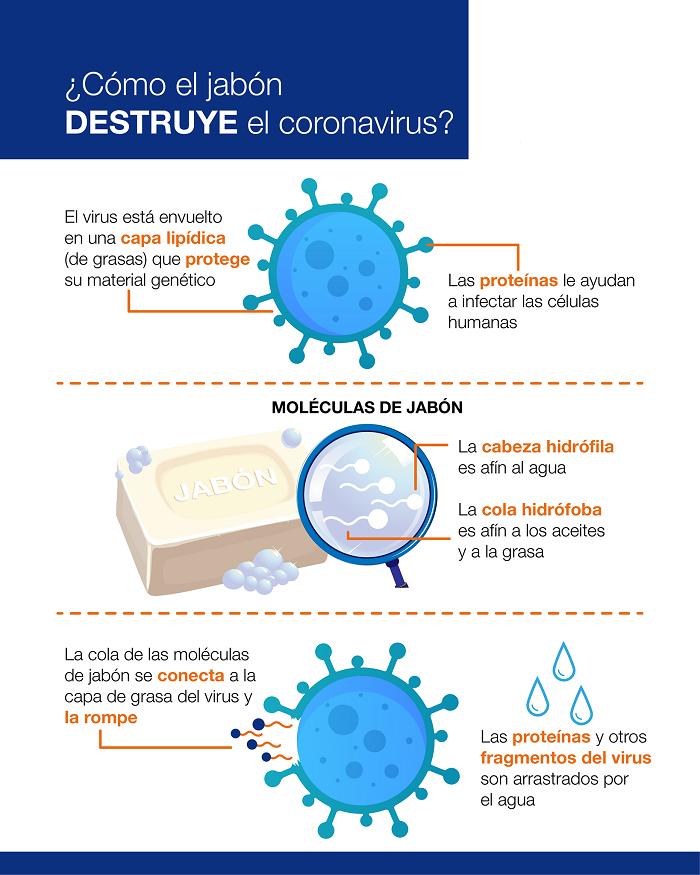 Como el jabon destruye el coronavirus