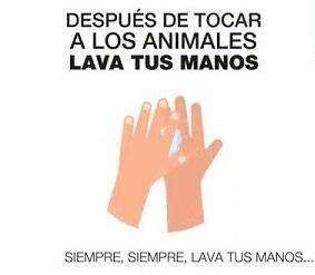 Medidas preventivas independiemente del covid-19 despues de tocar a los animales lava tus manos